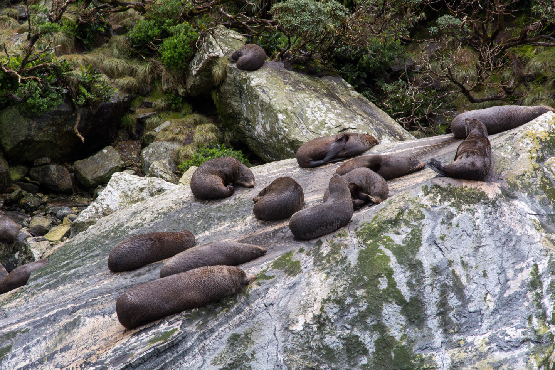 Fiordland – Milford Sound – Seal Rock