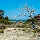 Kréta - ostrov Chrisi
